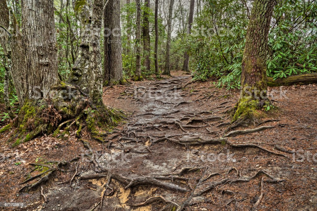 Linville forest stock photo