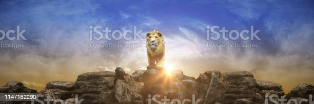 Photo of Lion at sunset. 3d rendering