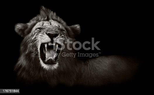 istock Lion displaying dangerous teeth 176751844