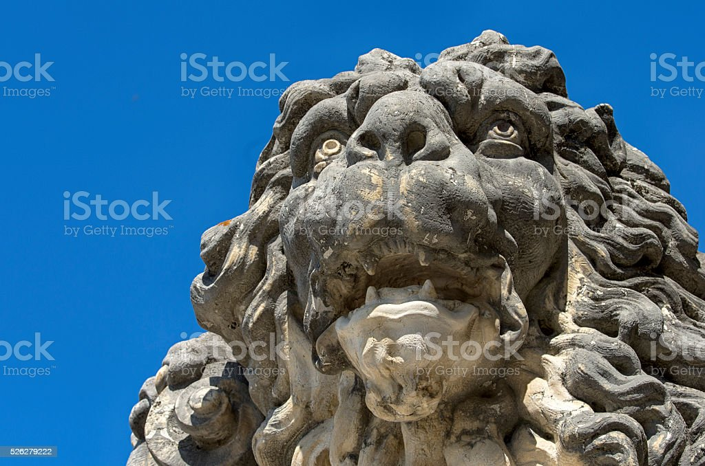Lion face royalty-free stock photo