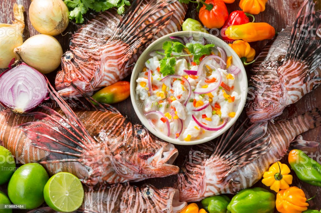 Lion fish ceviche stock photo