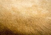 Lion Fur Texture detail provides animal background image
