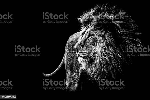 Free Black And White Animal Images Pictures And Royalty Free Stock Photos Freeimages Com