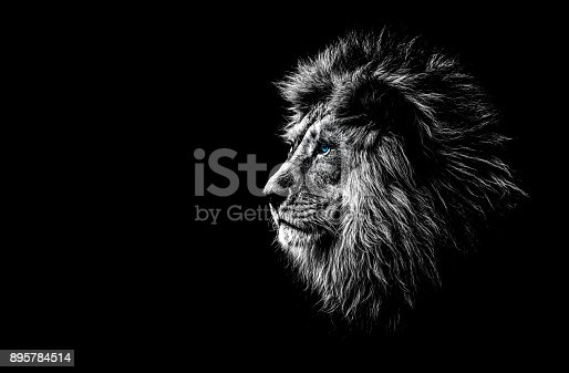 istock lion in black and white with blue eyes 895784514