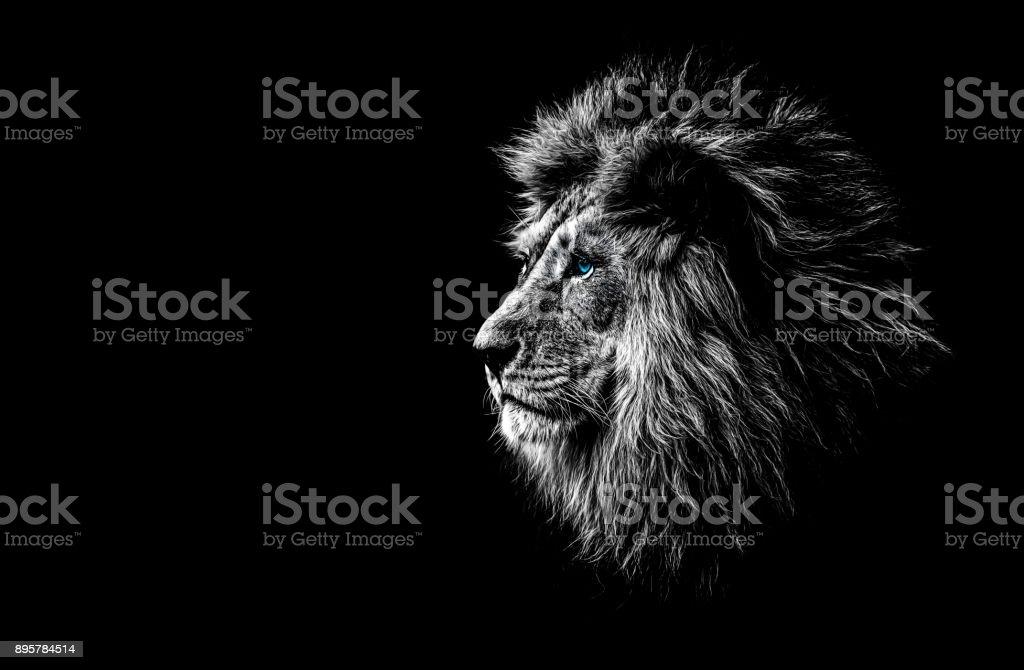 Lion en noir et blanc aux yeux bleus - Photo