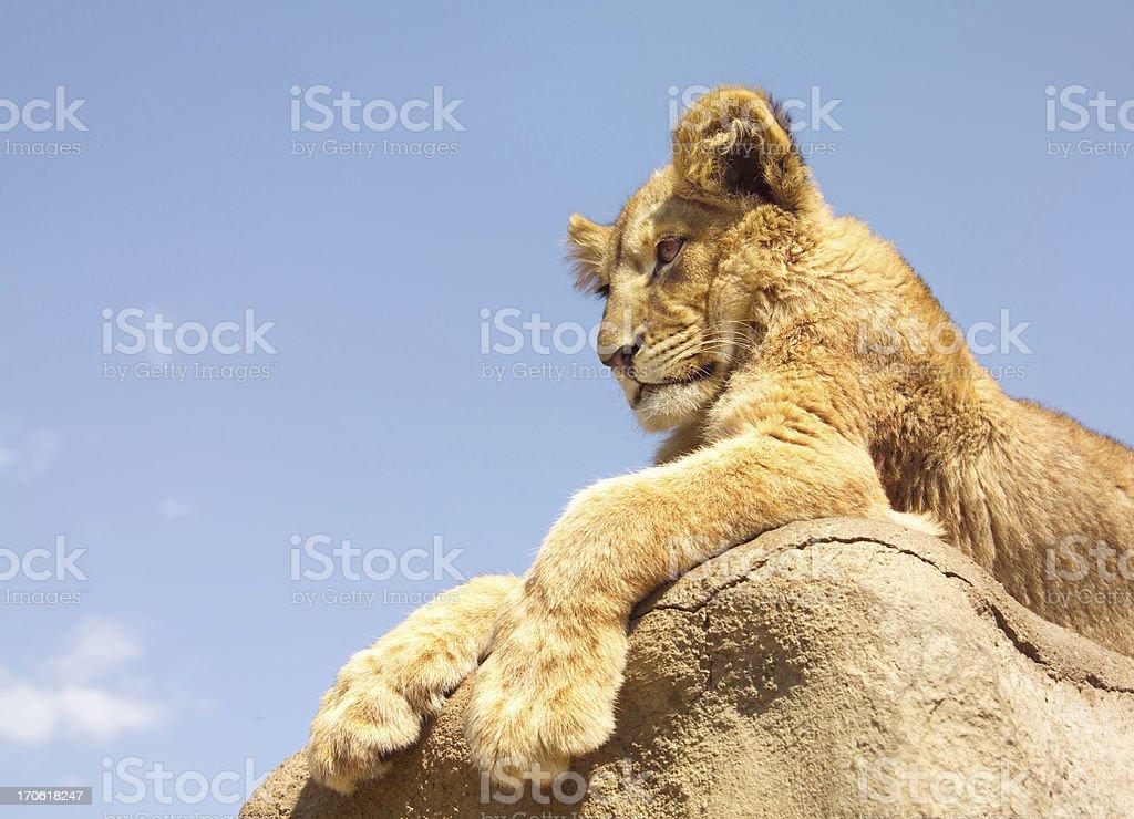 lion king royalty-free stock photo