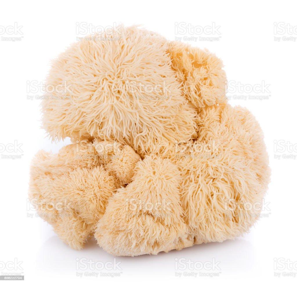lion mane mushroom isolated on white background stock photo