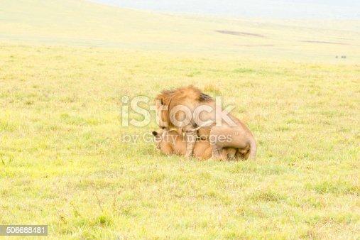 Lion Mating at Ngorongoro
