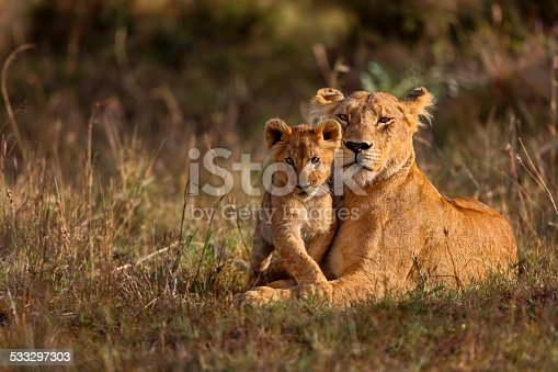 istock Lion mother with cub 533297303