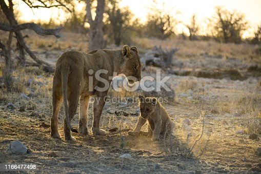 Etosha National Park is a national park in northwestern Namibia. Etosha National Park spans an area of 22,270 square kilometres (8,600 sq mi) and gets its name from the large Etosha pan which is almost entirely within the park. The Etosha pan (4,760 square kilometres (1,840 sq mi)) covers 23% of the area of the total area of the Etosha National Park. The park is home to hundreds of species of mammals, birds and reptiles, including several threatened and endangered species such as the black rhinoceros.