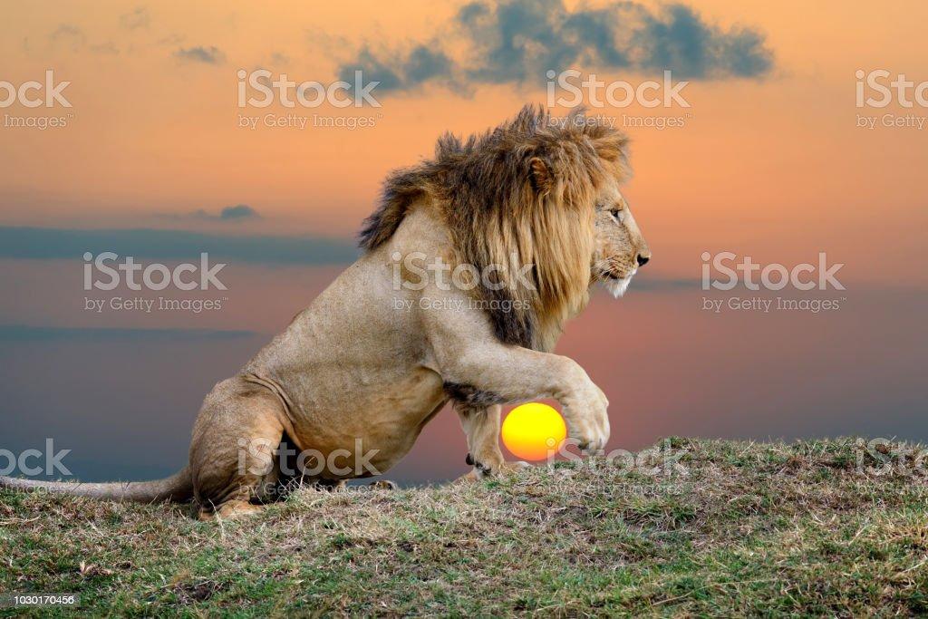 Löwe auf Sonnenuntergang Hintergrund - Lizenzfrei Afrika Stock-Foto