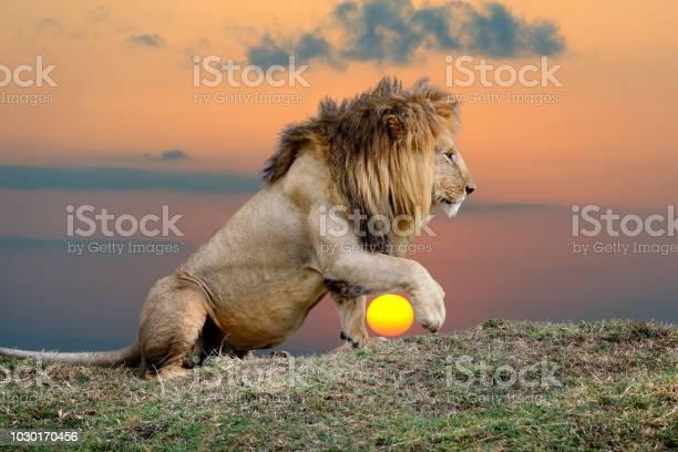 Löwe Auf Sonnenuntergang Hintergrund Stockfoto und mehr Bilder von Afrika