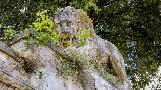 Lion Over the Wall