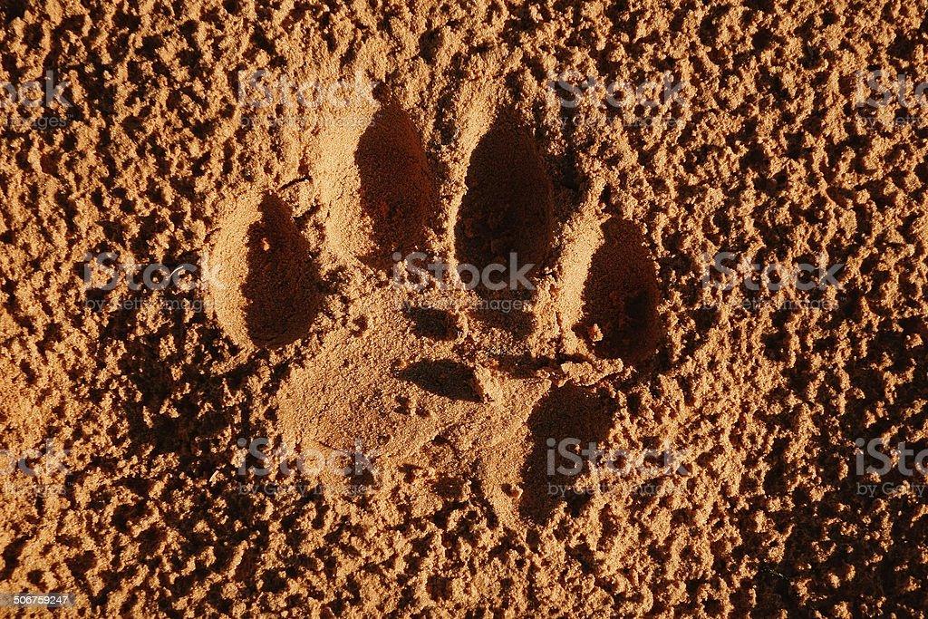 Lion paw imprint stock photo