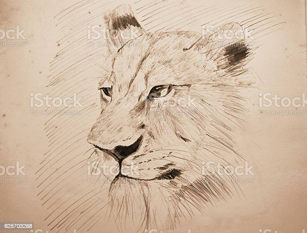 Lion pencil sketching on old paper with sepia tone picture id625703268?b=1&k=6&m=625703268&s=612x612&h=4 ezychzxc9dqsb0do3zkuwfpzai83kbawdszt1otda=