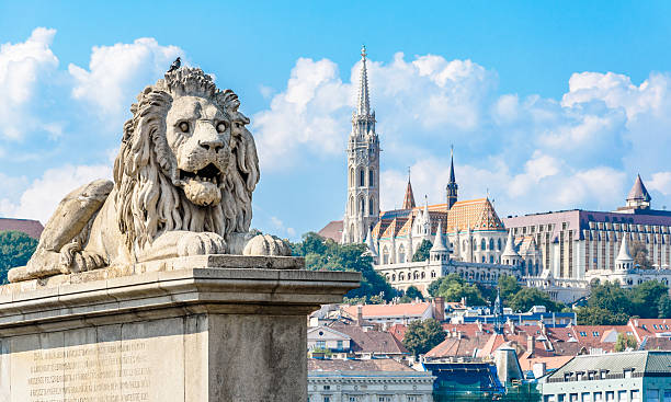 lion statue on the chain bridge in budapest. fisherman's bastion. - マーチャーシュ教会 ストックフォトと画像