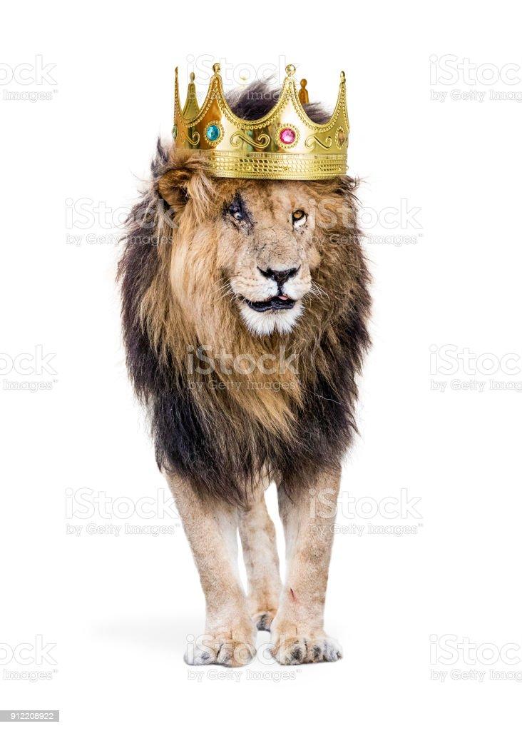 Aslan Kral orman Crown ile stok fotoğrafı