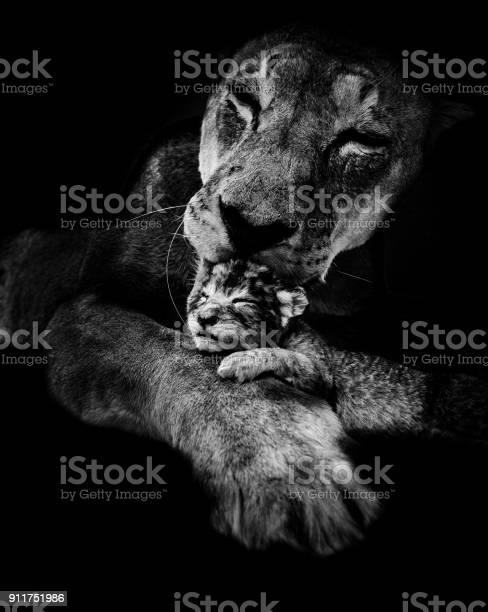 Lioness licking her newborn puppy in the dark picture id911751986?b=1&k=6&m=911751986&s=612x612&h=lg9omvupma6ghztxmjiu3jsc2hevag3bom1rducw9xu=