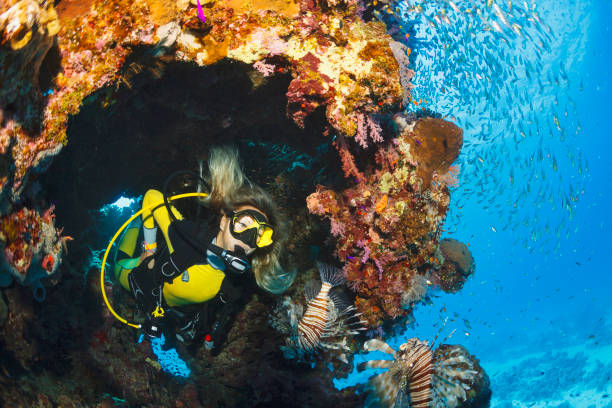 Lionfish and glassfish fish Underwater Sea life  Coral reef  Underwater photo Scuba Diver Point of View. Female scuba diving in background. stock photo
