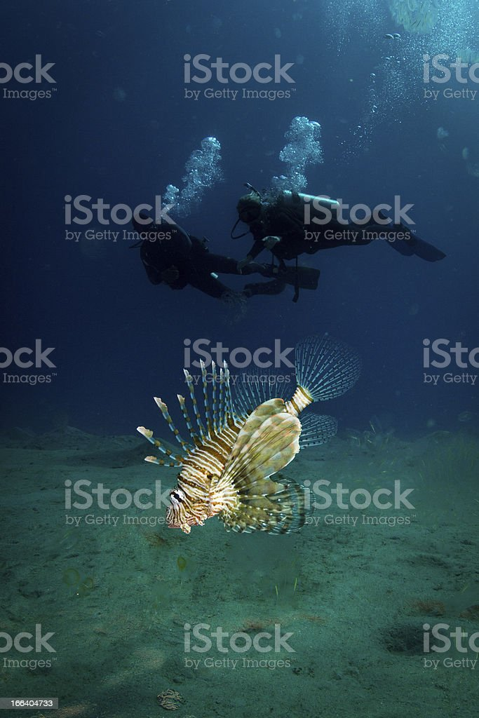 Lionfish and Silhouette Scuba Divers royalty-free stock photo