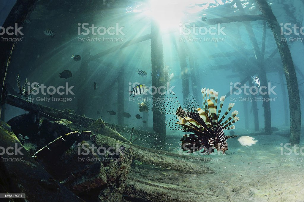 Lionfish at dive center in Mabul, Sipadan, Malaysia stock photo