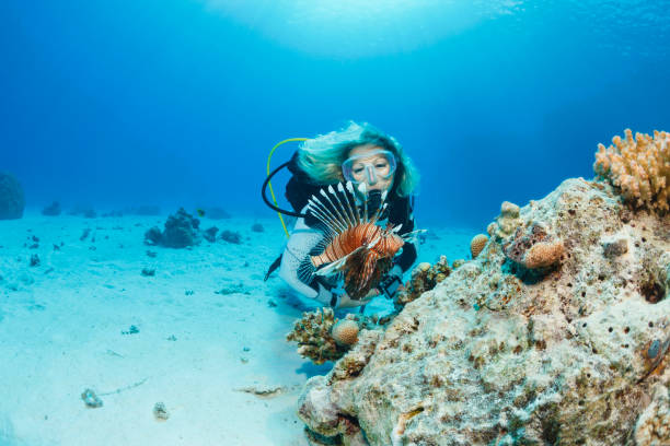 Lionfish fish Underwater Sea life  Coral reef  Underwater photo Scuba Diver Point of View. Female scuba diving in background. stock photo