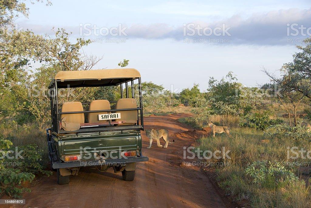 Lions Crossing stock photo