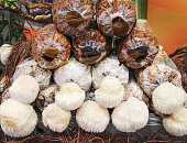 Lion's mane mushrooms or hericium erinaceus growing on plastic bag , nature indoor background