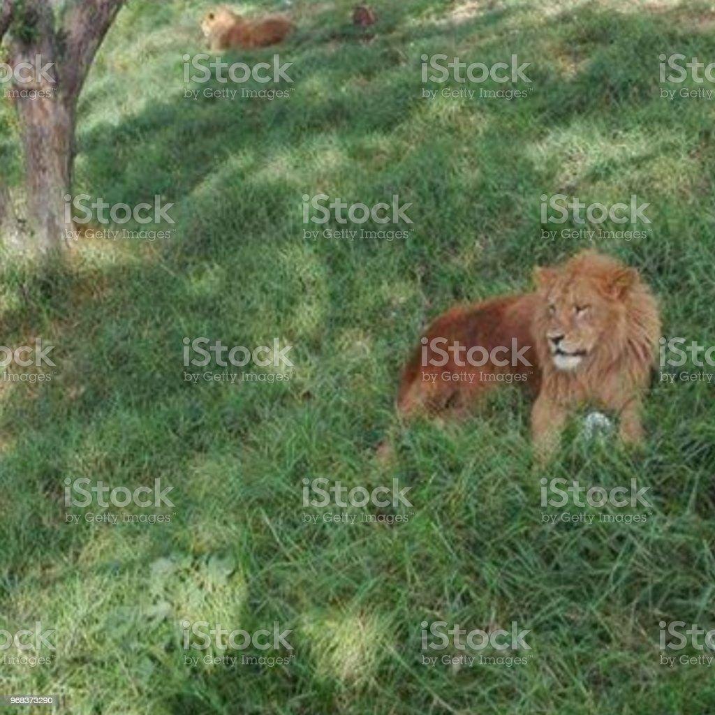Leão's - foto de acervo