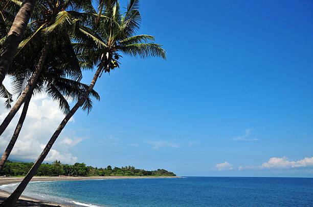 liquiça, osttimor: strand und kokospalmen - kapverdische inseln stock-fotos und bilder