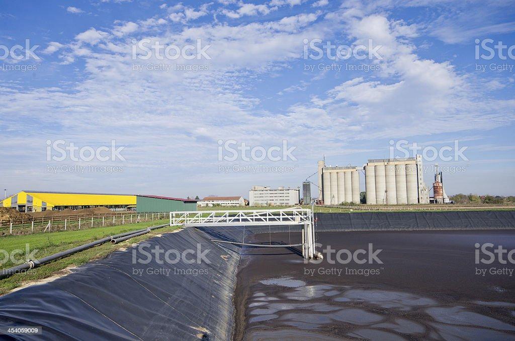 Liquid cow manure stock photo