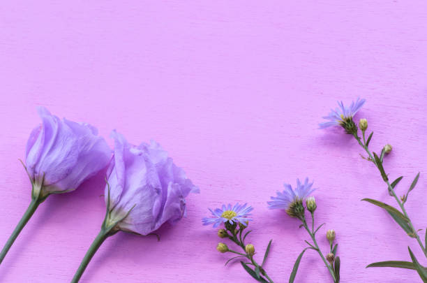 Lisianthus and Asters with Copy Space stock photo