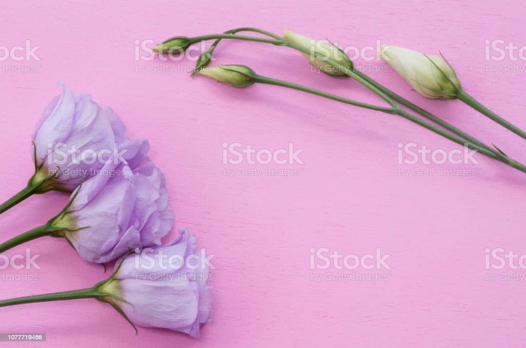 Lisianthus and copy space stock photo