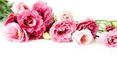 Lisianthus flower background