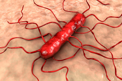 Listeria monocytogenes, Gram-positive bacterium with flagella that causes food-borne infection listeriosis, and also meningitis and sepsis, 3D illustration