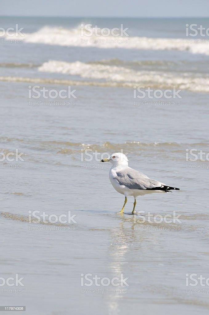 Litchfield Beach, SC stock photo