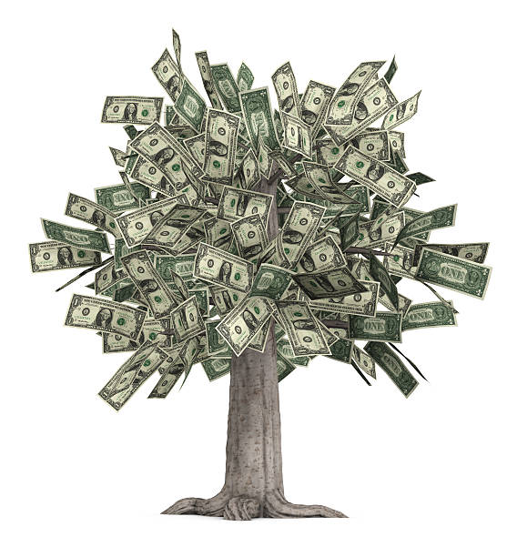 Literal money tree with dollar bills for leaves This is a high-resolution 3d render of a rooted tree with a thick truck that is growing currency over white. money tree stock pictures, royalty-free photos & images