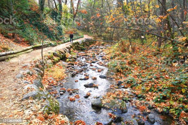 Photo of Lithia Park in Autumn, Oregon-USA