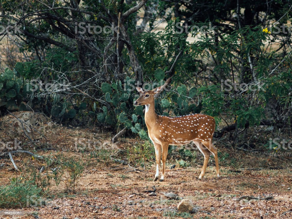 Litlle deer stay in the forest stock photo