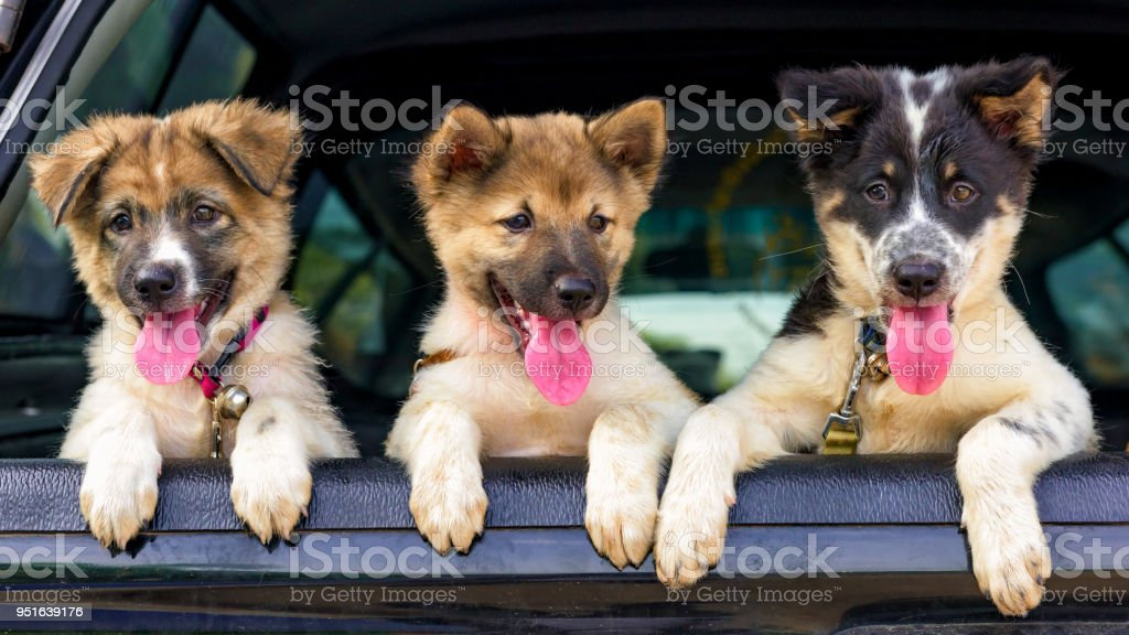 Camada de cachorros en la recolección. - foto de stock