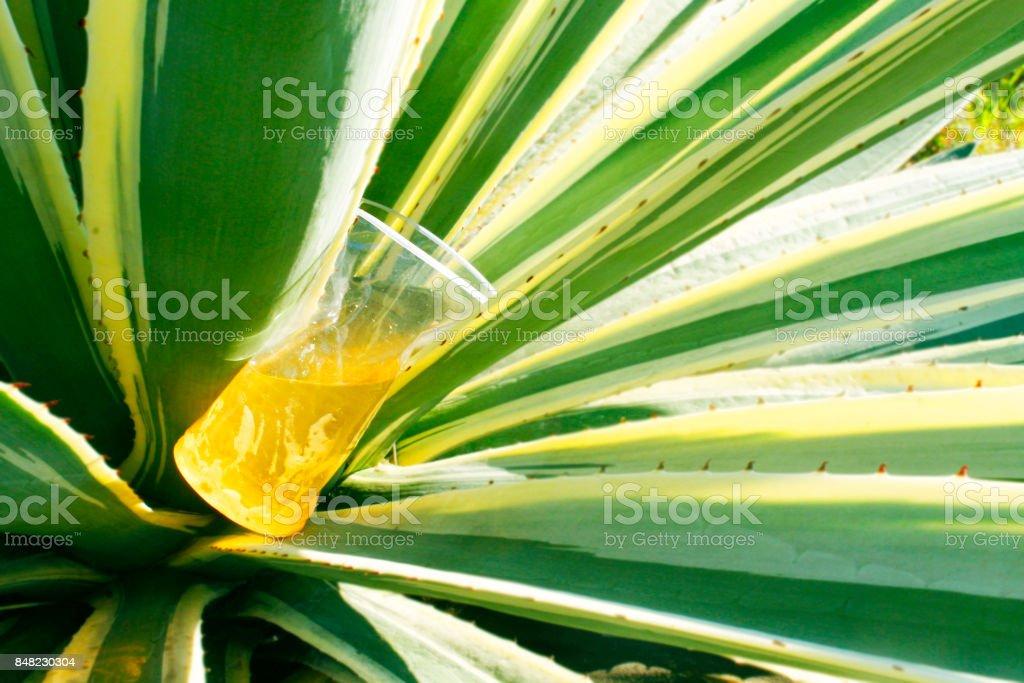 litter stuck in green stock photo