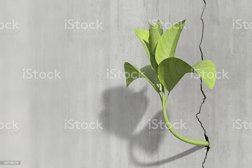 Little 3d plant growing on a concrete wall stock photo
