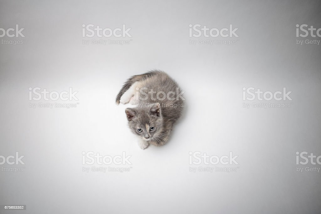 Little a lonely kitten tricolor lies quietly and looking with sad eyes royalty-free stock photo
