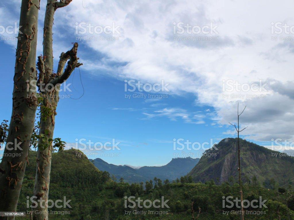 4ca381968 Little Adams Peak Ella Sri Lanka Stock Photo   More Pictures of ...