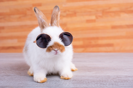 Little adorable bunny rabbit with sun glasses stay on gray table with brown wood pattern as background