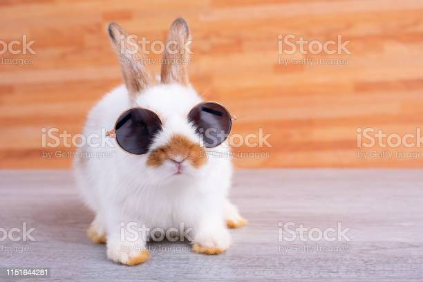 Little adorable bunny rabbit with sun glasses stay on gray table with picture id1151644281?b=1&k=6&m=1151644281&s=612x612&h=5wjzkofz wqgcrt45jtozkctmvijnwr2ffa473h1gig=