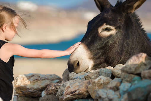 Little adorable girl with donkey on Mykonos