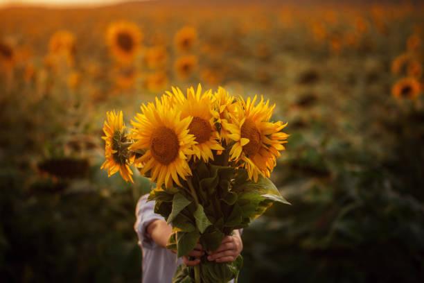 criança adorável garotinho segurando buquê de girassóis em dia de verão. criança dando flores. - membro parte do corpo - fotografias e filmes do acervo