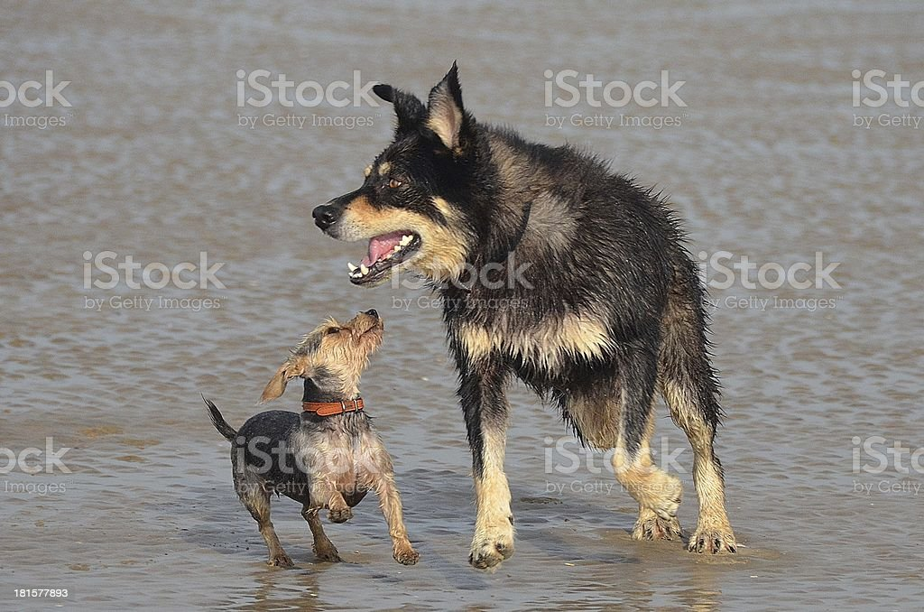 Little and Large playing at the beach royalty-free stock photo