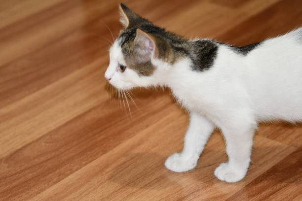 Little and sweet cat playing picture id1204817543?b=1&k=6&m=1204817543&s=612x612&w=0&h=5azepbuq2gan2aemeose3e4lpjoc2nh8upixn7au8fk=